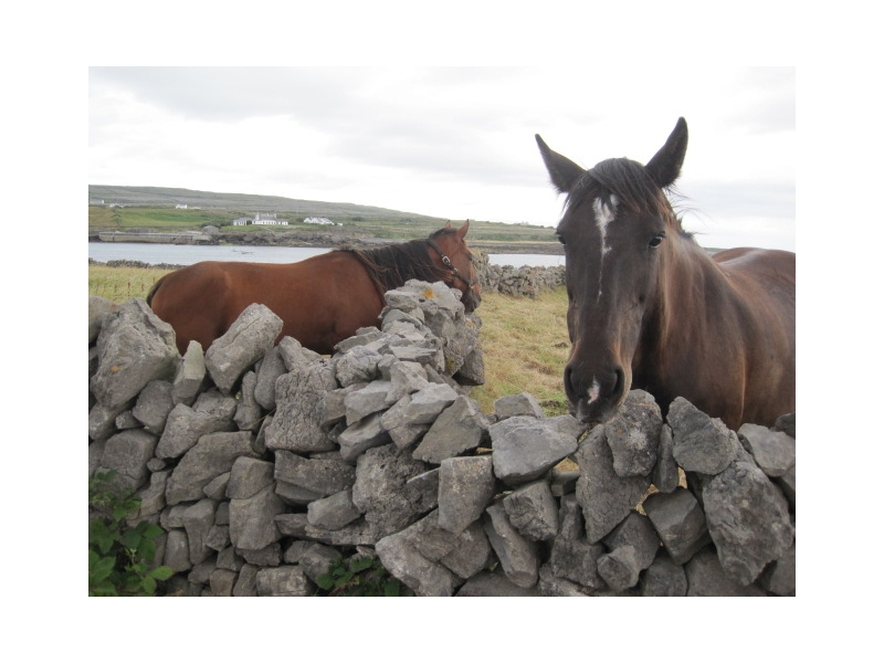 Galway Private Tours